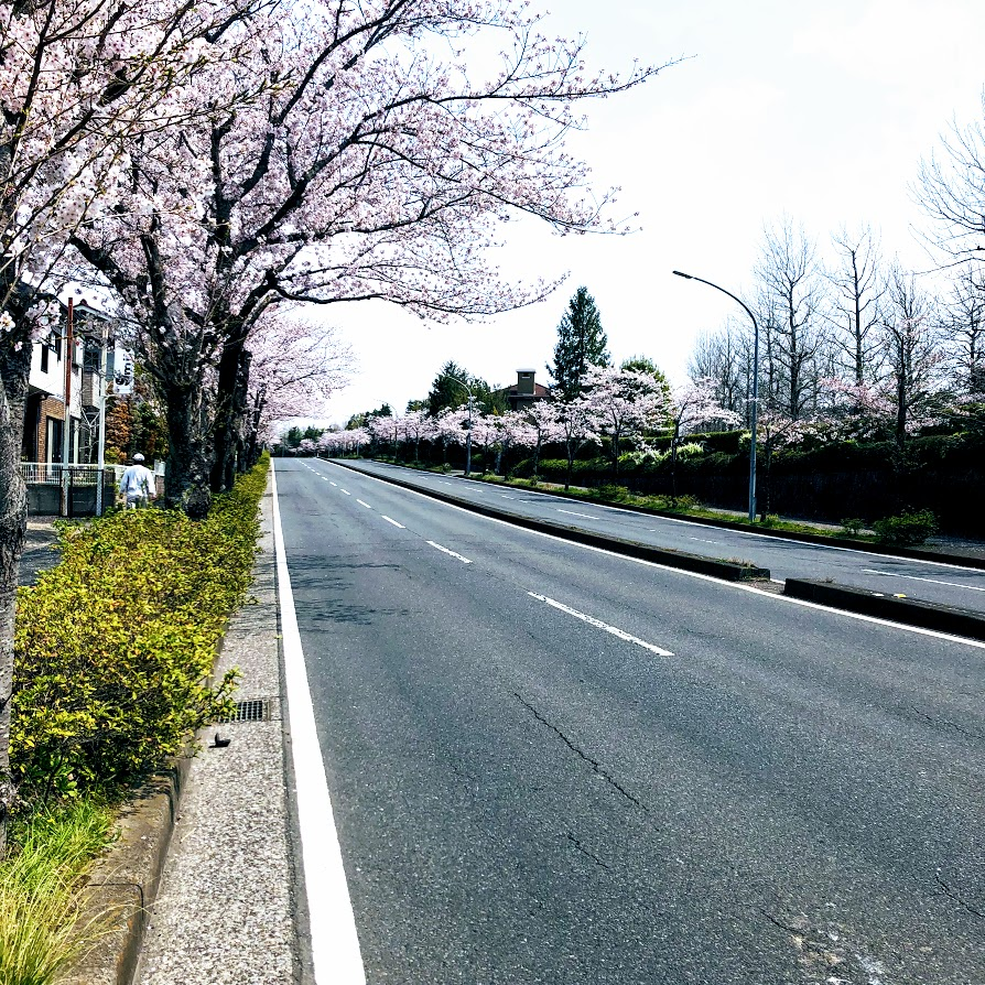 f:id:fumitaka-siro:20190408204500j:plain