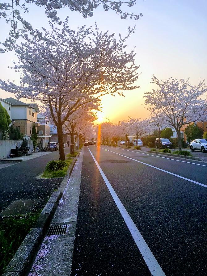 f:id:fumitaka-siro:20190408204518j:plain