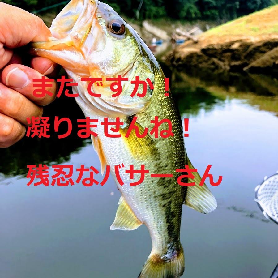 f:id:fumitaka-siro:20191002204432j:plain