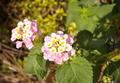 [DA18-55]花