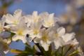 [70-300DG]花