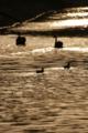 [70-300DG]川と鳥