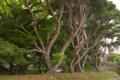 [DA18-55]樹木
