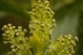 [DA18-55]植物写真