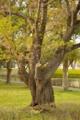 [DA50]樹木