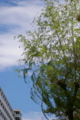 [SP90]樹木