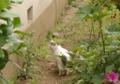 [DFA50]猫写真