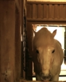 [DA35]馬