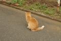 [DA50]猫写真