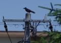 [70-300DG]鳥写真