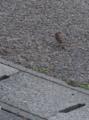 [DA70]鳥写真