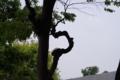 [DA70]樹木