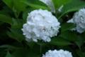 [DA18-55]花写真