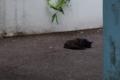 [DA18-55]猫写真