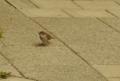 [DA50]鳥写真