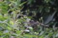 [Q06]蜻蛉