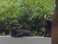 [110_20-40]猫写真