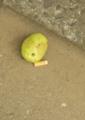 [Q05]果実