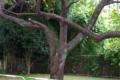 [FA43]樹木