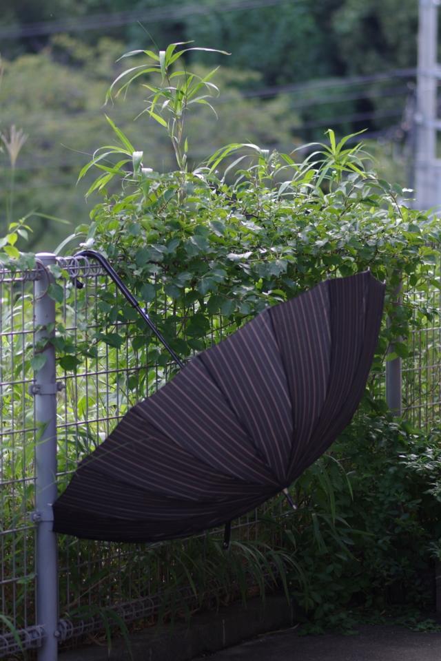 傘のある風