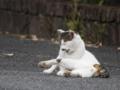[70-300DG]猫写真
