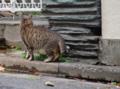 [DA70]猫写真