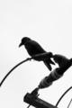 [SP90]鳥写真