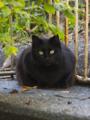 [DAL50-200]猫写真