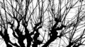 [Q06]枝
