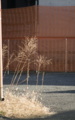 [DAL50-200]植物写真