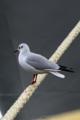 [DAL50-200]鳥写真