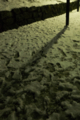 [Q08]雪