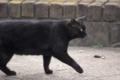 [DAhd55-300]猫写真