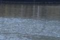 [DAhd55-300]水面