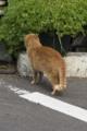 [SP90]猫写真