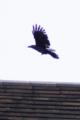 [DFA100]鳥写真