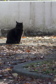 [FA77]猫写真