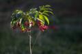 [FA77]植物写真