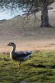 [FA77]鳥写真