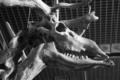 [Q06]化石