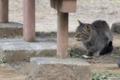 [DFA100]猫写真