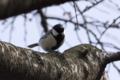 [DAhd55-300]鳥写真
