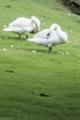 [110_70]鳥