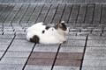 [110_50]猫写真