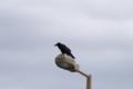 [110_50]鳥写真