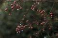 [110_50]植物