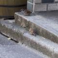 [Q06]鳥写真