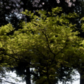 [Q06]草木
