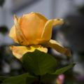 [Q06]花写真