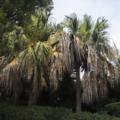 [Q02]植物写真